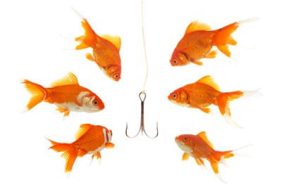 link bait goldfish